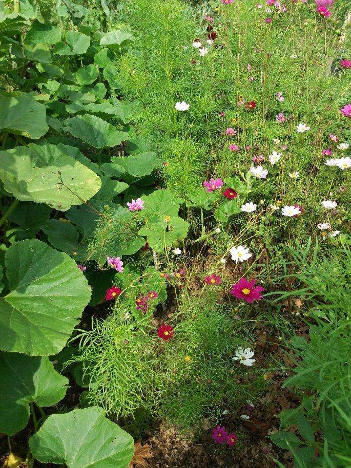 planten in moestuin
